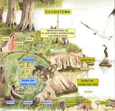 ECOSISTEMA.cmap (983×952) Teaching Kids, Teaching Resources, Dual Language, Science Biology, Animal Species, Learning Spanish, Pre School, Homeschool, Education