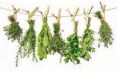 Increíble guia de las 230 plantas medicinales más efectivas y sus usos