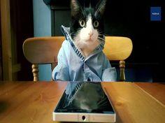 """""""Catz using Lumia 930"""" (Gatos usando el Lumia 930) #Microsoft  concursocreativa en video para #Lumia,  """"familia"""" de gatos fue el ganador."""