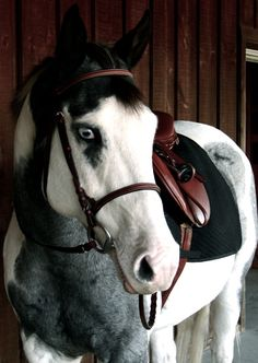 my dream horse :3 <3