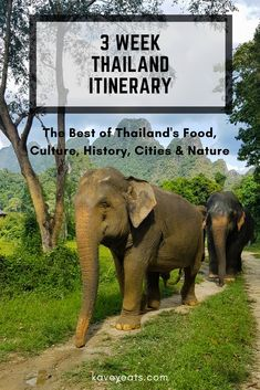 A Comprehensive 3 Week Thailand Itinerary focusing on the best of Thai Food, Culture, History, Cities and Nature. (Asian Elephants in an Elephant Sanctuary)