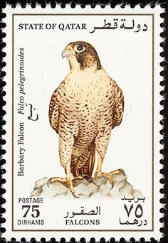 Barbary Falcon stamps - mainly images - gallery format