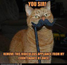 you sir remove this ridiculous appliance from my countenance at once. ginger cat