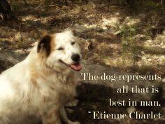 By Etienne Charlet Mans Best Friend, Girls Best Friend, Best Friends, Dog Quotes, Animal Quotes, I Love Dogs, Puppy Love, Baby Animals, Animal Babies
