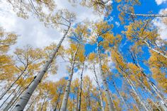 Professional photographer Christine Hauber gives you 5 highly effective exercises to help you get started with creative nature photography. Nature Photography Tips, Macro Photography, Creative Photography, Amazing Photography, Street Photography, Dark & Stormy, Aspen Trees, Abstract Images, Landscape Photographers