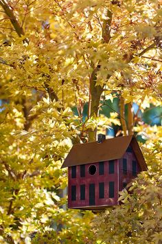 saltbox birdhouse...I love this little birdhouse so much..thanks to whoever put it on a board...