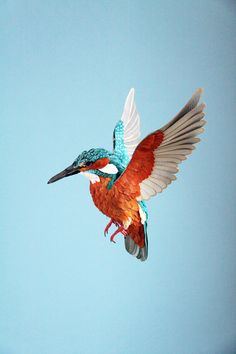 WG-poster_diana-beltran-herrera-kingfisher.jpg (3168×4752)