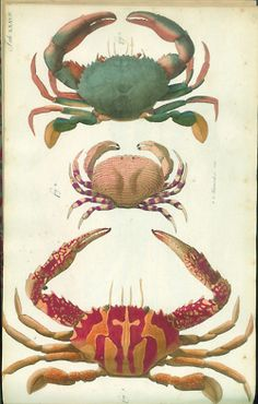 AstroSpirit / Cancer ♋ / Water / The Crab / illustration
