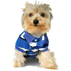 Stinky G College Blue Stripe Dog Polo Shirt >>> Check out this great image  (This is an amazon affiliate link. I may earn commission from it)