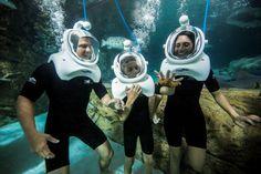 Seaventure: Passeio Subaquático no parque Discovery Cove Orlando Discovery Cove Orlando, Orlando Theme Parks, Orlando Resorts, Orlando Florida, Disney Parque, Family Resorts, Am Meer, Sea World, Travel Usa