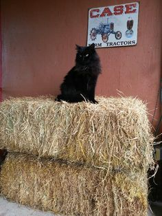 at McMillan Farms. Farm Life, Farms, Feathers, Kitty, Animals, Little Kitty, Homesteads, Animales, Animaux