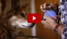 I Never Knew That Dogs Had This Amazing Gift.  I Love Mine Even More After Watching This.