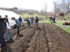 Beyond Nitrates: Understanding Anions in Soil Fertility in the Northeast