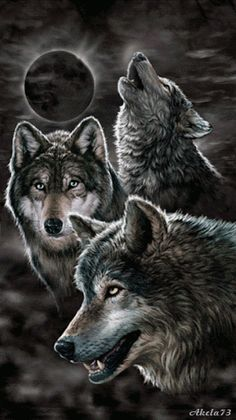 a pack of wolves