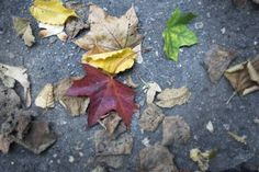 "Saatchi Art Artist Chiara Vignudelli; Photography, ""Leaves - LIMITED EDITION of 100"" #art"