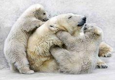 I love polar bears..