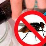 them to carry dangerous diseases Slim Down Drink, How To Slim Down, Sciatic Nerve, Nerve Pain, Baking Soda Detox Drink, Get Rid Of Flies, Back Pain Remedies, Brown Spots On Face, Fat Loss Diet