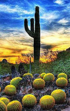 Desert Watermelons, Scottsdale, Arizona    http://www.liberatingdivineconsciousness.com
