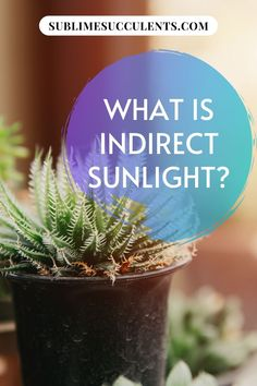 Wondering what is indirect sunlight? More than a few gardeners have been stumped when presented with the term 'indirect sunlight'. You might have even run into a care guide describing your succulent's ideal light levels as 'bright, indirect light'. Check this pin for more details! #gardening #indirectsunlight #sunlight Cacti And Succulents, Cactus Plants, Curtains Or Shades, Zebra Plant, Light Meter, Low Light Plants, Succulent Care, Plant Needs, Types Of Plants