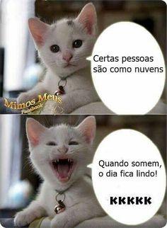 Pra rir #Gatinho #FilosofiaDeRua