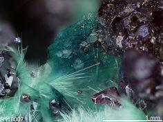 Claringbullite avec Cuprite et Brochantite. Southwest mine, Bisbee, Cochise County, Arizona, USA Source: Marcus Origlieri