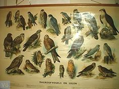 Dagroofvogels en uilen
