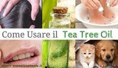 Ecco come usare il Tea Tree Oil per dermatiti, eczemi, forfora, punture di insetti, pidocchi, raffreddore, mal di gola, candida, emorroidi,…