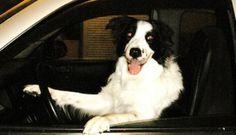 Meet a Lowcountry Dog: Taz