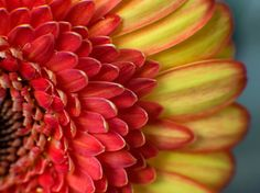 Red Yellow and Red by RussellHartPhoto on Etsy