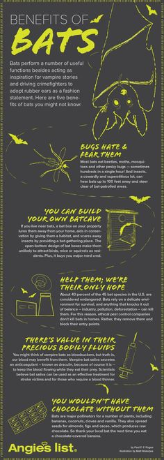 Scared of bats?  Reasons why you may actually want them around.
