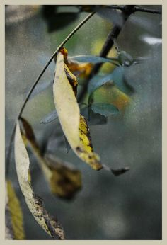 iPhoneography 9-24 -14 #966 Ribbons  – Armin Mersmann