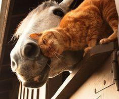 cavalo | Tumblr