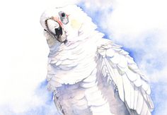 Corella print of watercolour painting A4 size by LouiseDeMasi