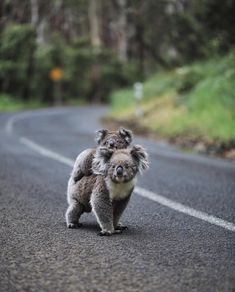 65 Baby Animals That Can Fill Your Heart With Joy - Beautiful Creatures - Animals Wild Beautiful Creatures, Cute Creatures, Amazing Animals, Animals Beautiful, Interesting Animals, Cute Little Animals, Cute Funny Animals, Cute Wild Animals, Nature Animals