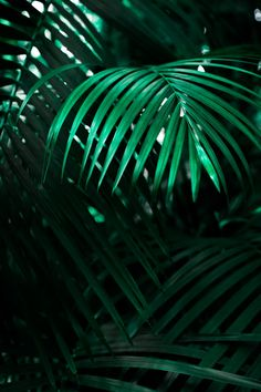 Download this free HD photo of greenery, leaf, frond and wallpaper in København, Denmark by Mona Eendra (@monaeendra)