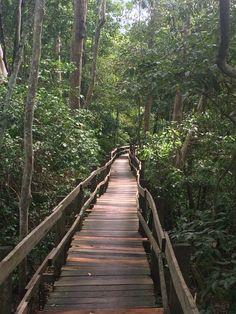 Rumo ao desconhecido | Floresta Amazônica  #letsgetlost #wildlife #wildmood #fauna #flora #Brasil #Brazil #rainforest #instatrip #amazonas #intothewild #exploration #exoticlife #forestspirits #greenpeople #aventura #exploração #mataadentro #matavirgem #grandiosa #magnífica #nature #exótico #gigante #selva #RDphotos #brasiltrip #experiência #beglobal #jungle