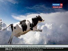 аргентинские коровы спешат на помощь  #роисся #санкции #еда #аргентина #крымнаш