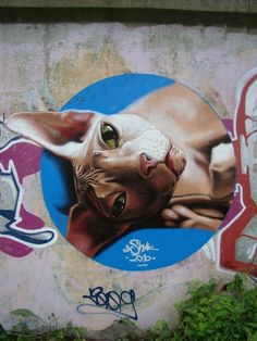 Siamese cat with superb execution by @kashak_art in Russia (http://globalstreetart.com/kashak).