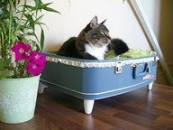 This is the bomb...a cats bed made out of a suitcase and something to make his bed soft...