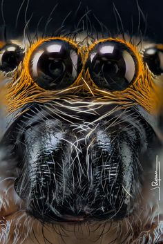 """""""Hypnosis"""" Javier Rupérez on Nature Animals, Animals And Pets, Web Foto, Animal Close Up, Spiders And Snakes, Spider Face, Spider Queen, Macro Pictures, Cool Insects"""