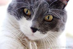 © copyright Marco Galli. Con Gatto Mirò. Galli Marco il fotografo dei gatti. CLICCA QUI https://www.facebook.com/ilgatto72?ref_type=bookmark
