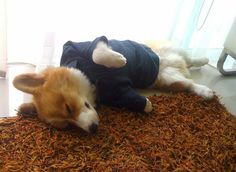 Being fashionable is exhausting.