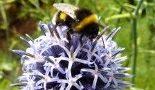 Which #flowers are best for attracting wildlife into your UK garden? #gardening