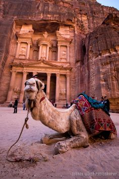 A day in Petra