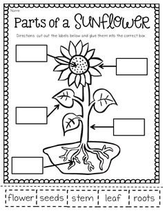 Life Cycle of a Flower- Students love to learn about how