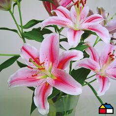 #Flores #Primavera #Garden #Sodimac