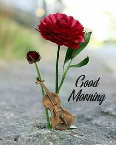 Good morning images for love Good Morning Friends Images, Good Morning Beautiful Pictures, Good Morning Images Flowers, Free Good Morning Images, Cute Good Morning, Good Morning Picture, Morning Pictures, Good Morning Wishes Friends, Night Flowers