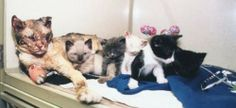 Mother Cat Walks Through Flames Not Once, But FIVE Times to Rescue Her Kittens From Fire. This IS Love.