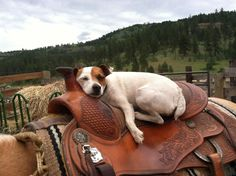 Love this! Just wish Jack could relax like this in the saddle.