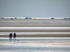 Brewster Flats, Cape Cod
